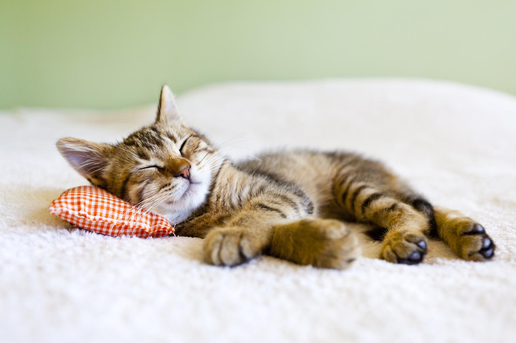 Traumhaft schlafen